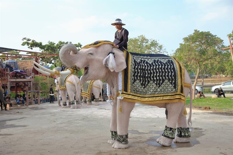 animals Story: white elephant meaning