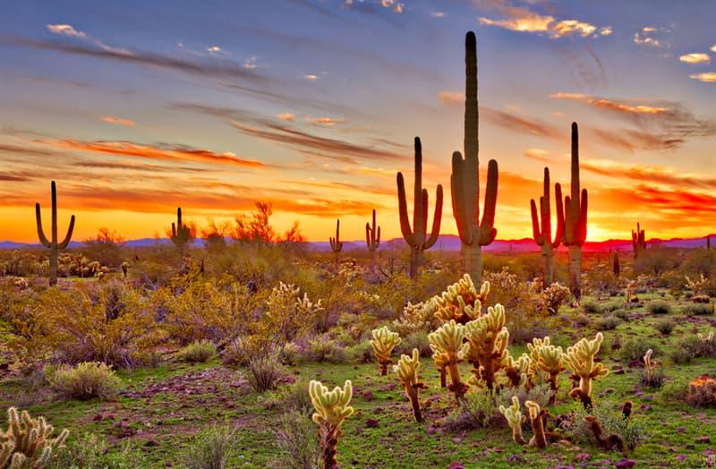 Nature Story: Sonoran Desert wildflowers