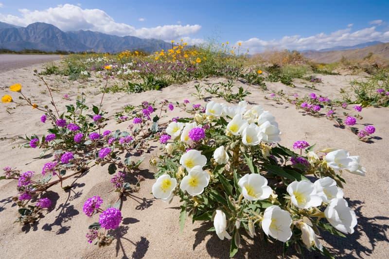 Nature Story: Anza-Borrego Desert