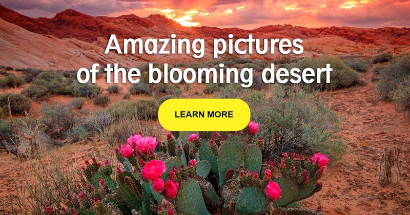 Nature Story: Blooming in the desert - when the impossible happens