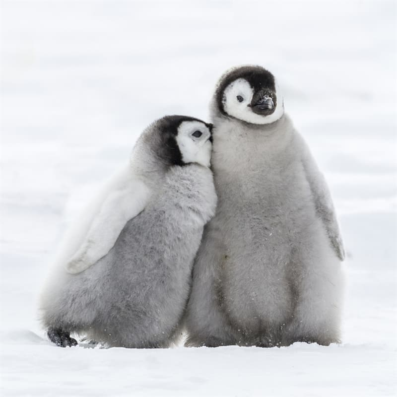 Culture Story: Weird holidays in April 2020 World Penguin Day 2020