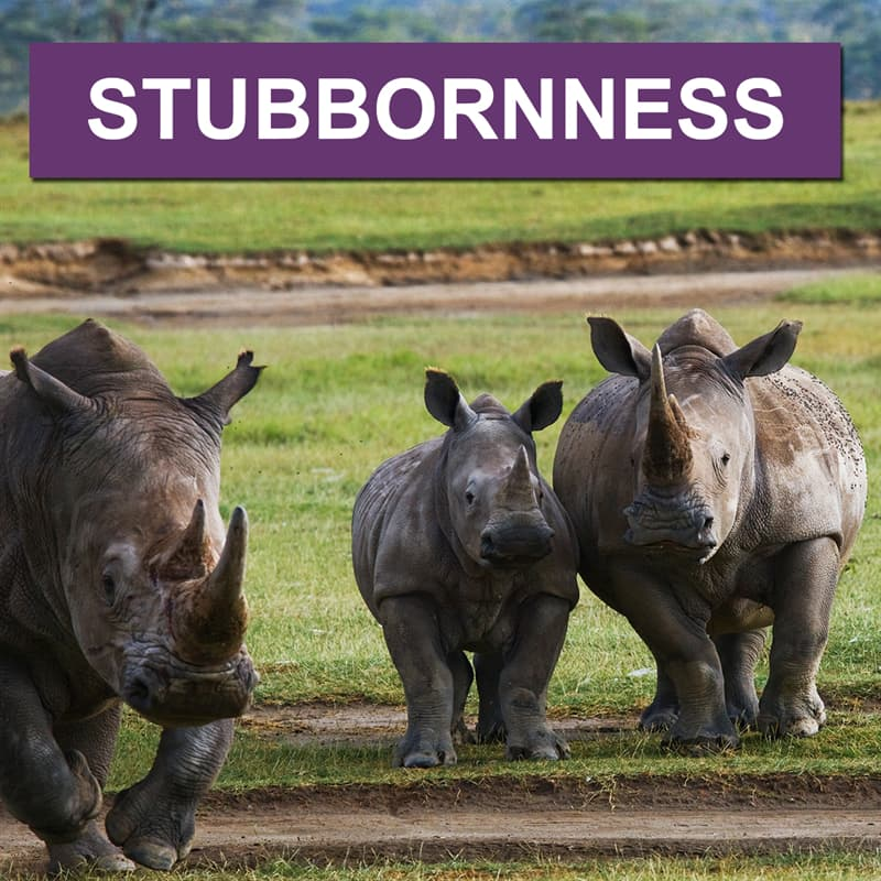 Nature Story: What is a group of rhinos called?