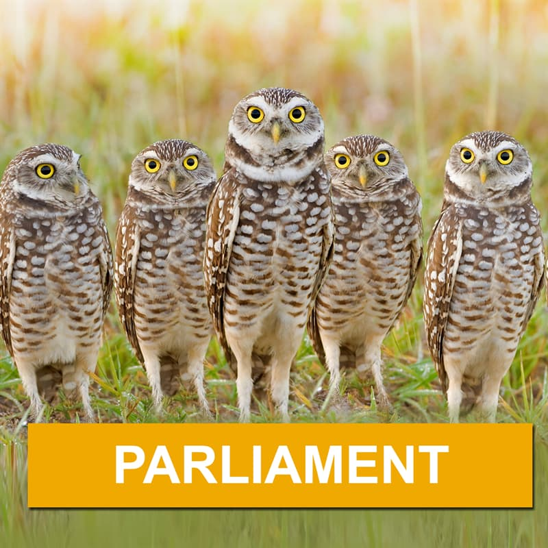 Nature Story: What is a group of owls called?