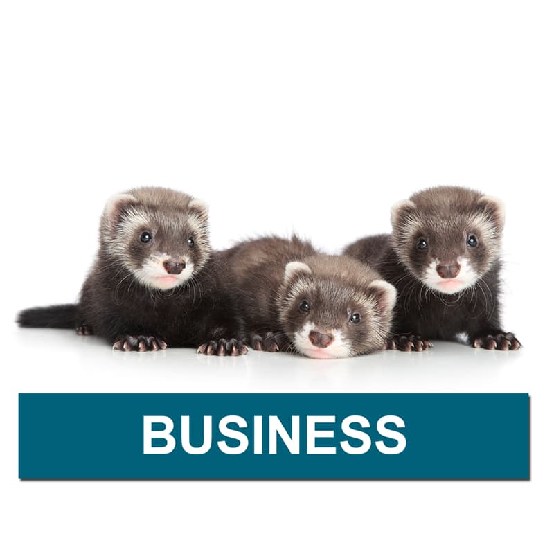 Nature Story: What is a group of ferrets called?