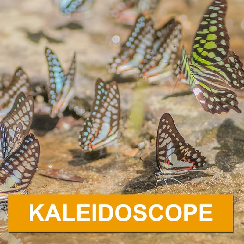 Nature Story: What is a group of butterflies called?