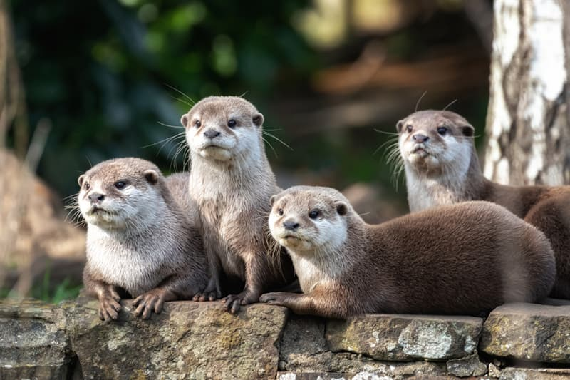 Nature Story: What is baby otter called?