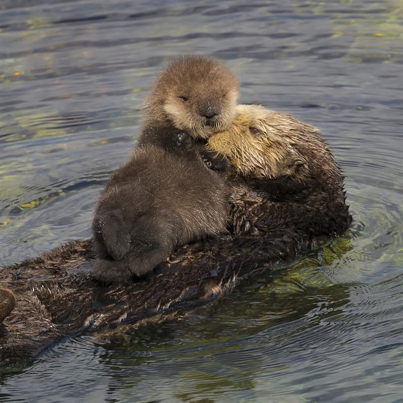 Nature Story: Baby otter facts