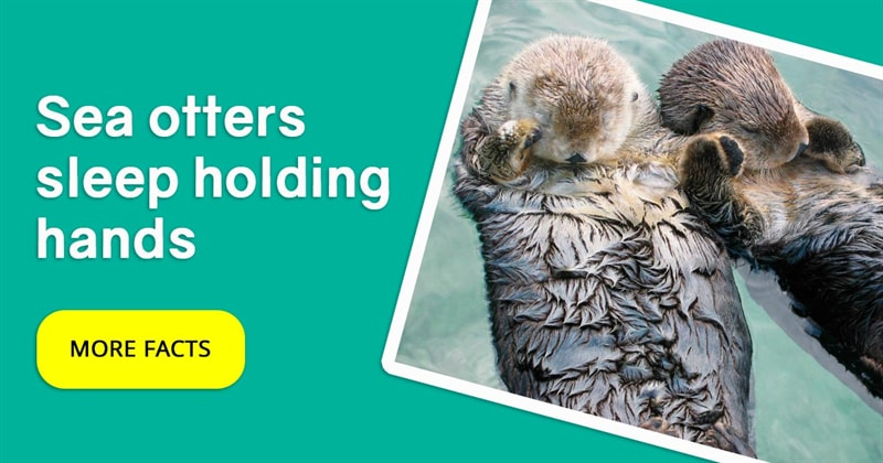 Nature Story: 5 fun facts about otters