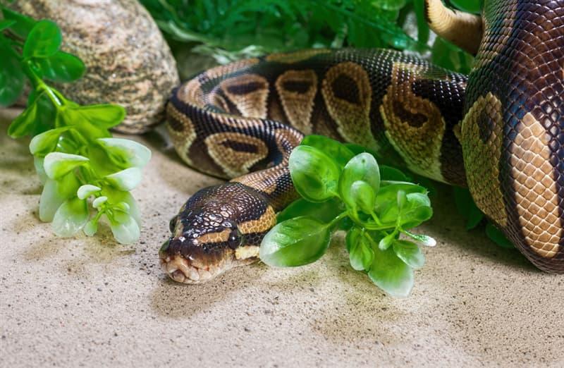 Nature Story: Non-venomous snakes