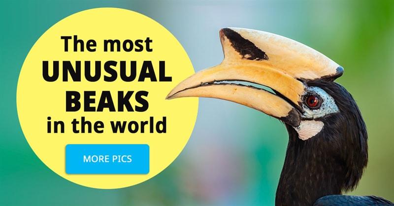 Nature Story: 6 birds with weird beaks