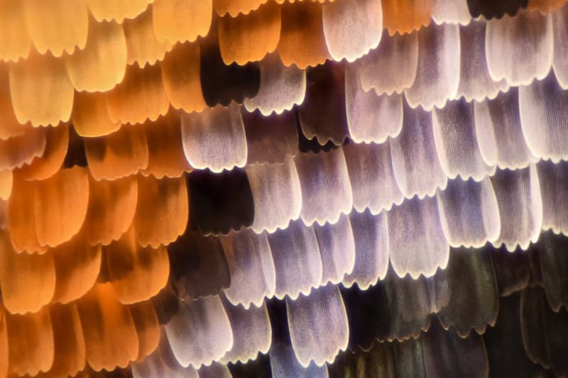 Nature Story: #4 Unbelievable pattern of a butterfly's wing