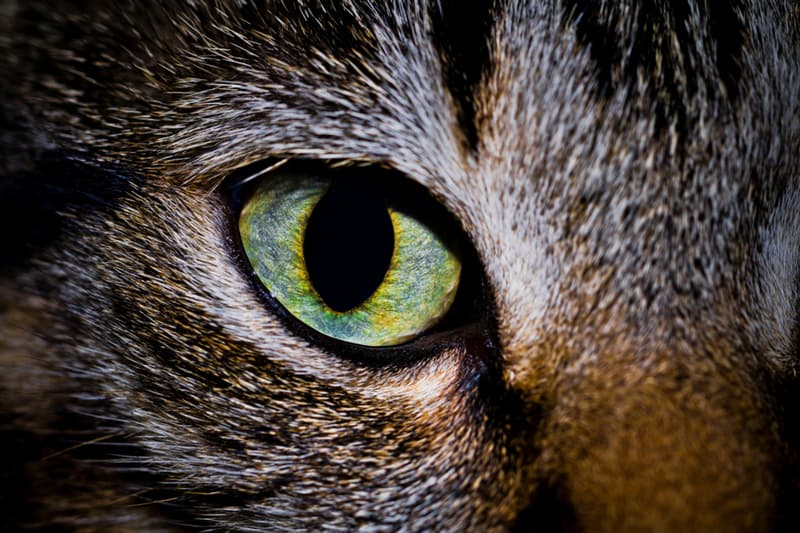 Nature Story: Facts about animal eyes