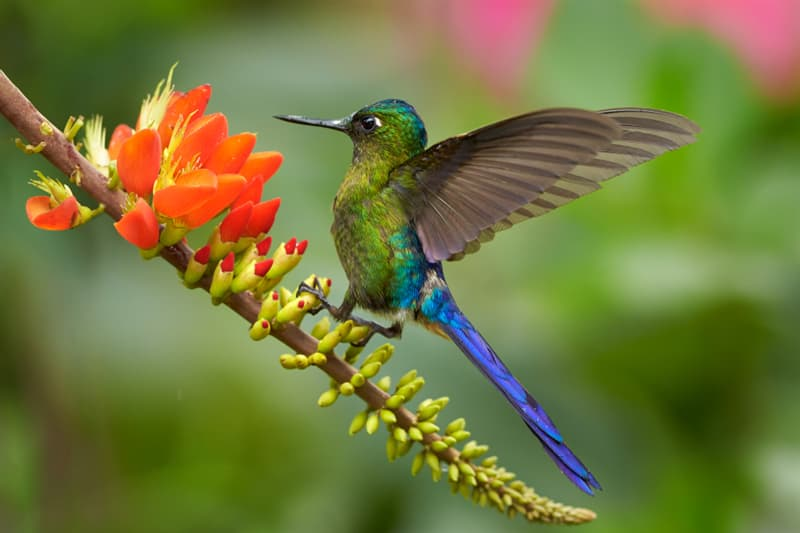 Nature Story: Hummingbirds Ecuador