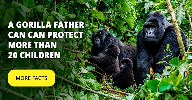 Nature Story: Top 5 best animal dads that really care