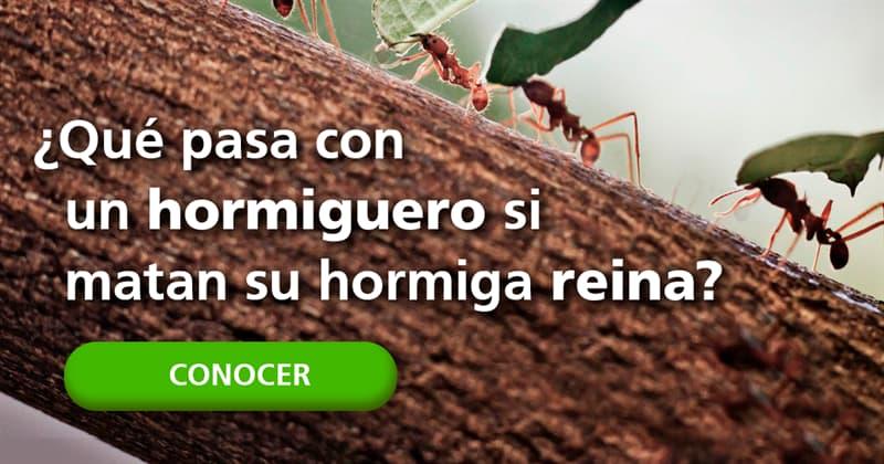 Naturaleza Historia: ¿Qué pasa con un hormiguero si matan su hormiga reina?