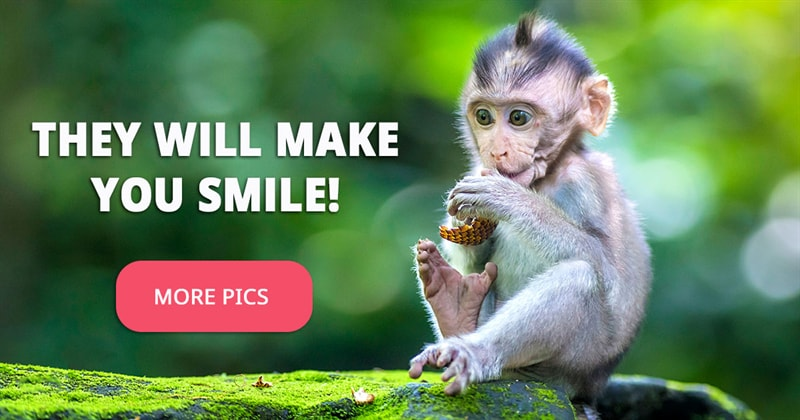 Nature Story: These 10 lovely pictures of baby monkeys will cheer you up