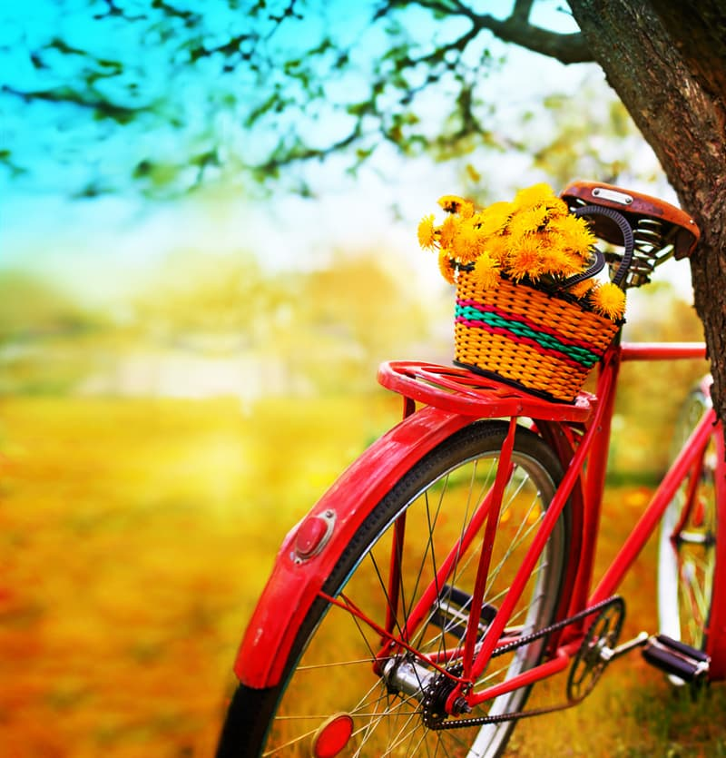Nature Story: Quotes about bicycle
