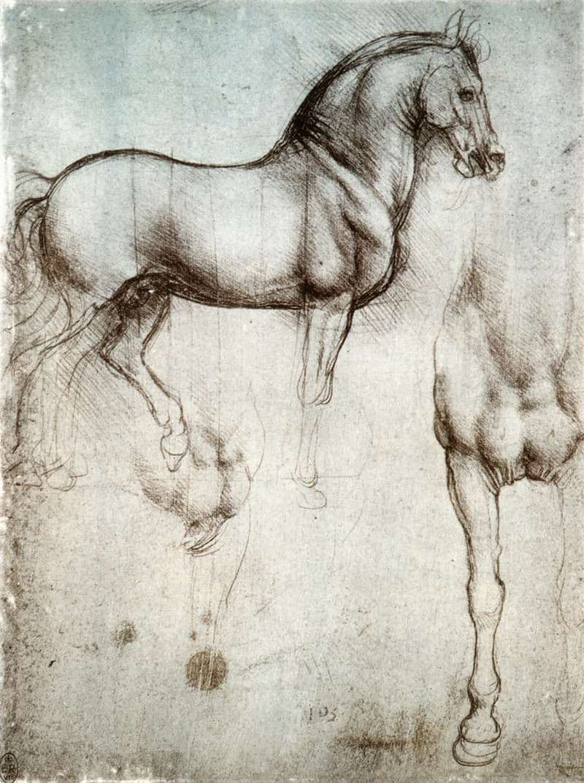 Culture Story: Leonardo da Vinci animal rights