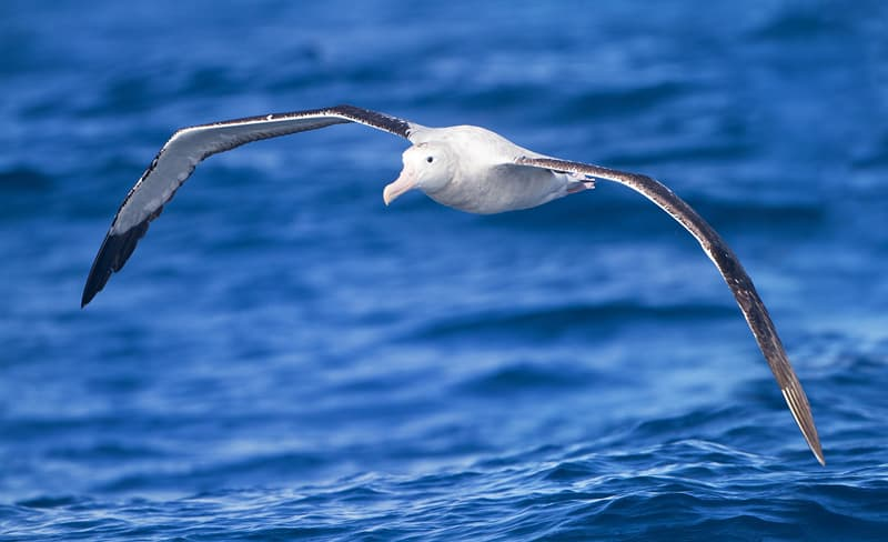 Nature Story: #4 Albatrosses can go years without landing