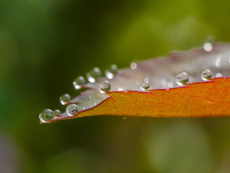 Nature Story: Macro photography water droplets on a leaf