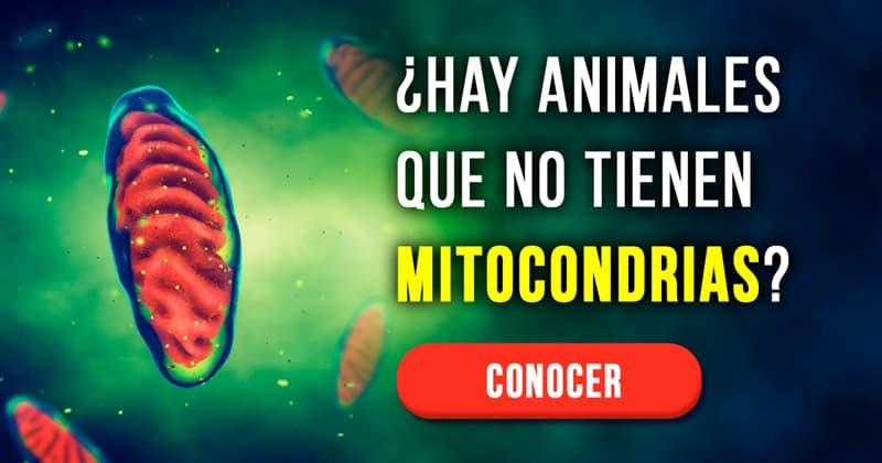 Сiencia Historia: ¿Hay animales que no tienen mitocondrias?