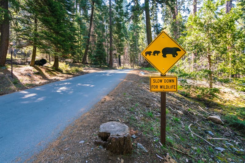 Geography Story: Animals in Yosemite National Park