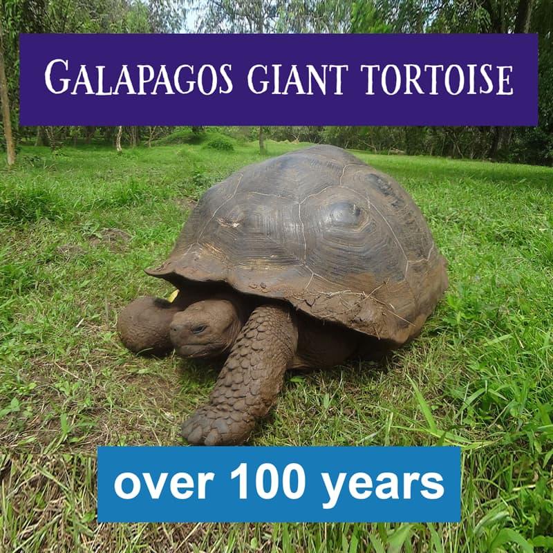 Nature Story: galapagos tortoise lifespan