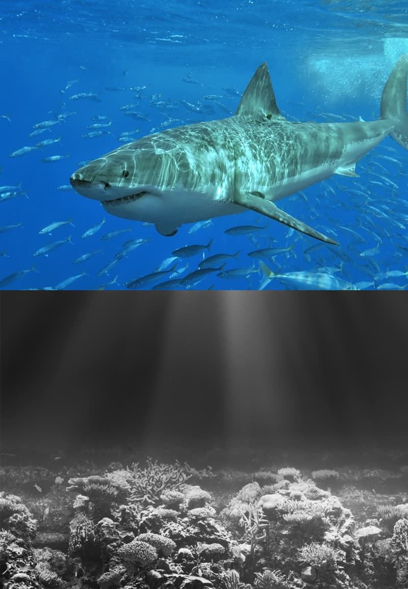 Nature Story: How do sharks see the world