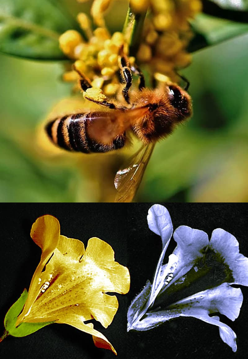 Nature Story: How do bees see the world