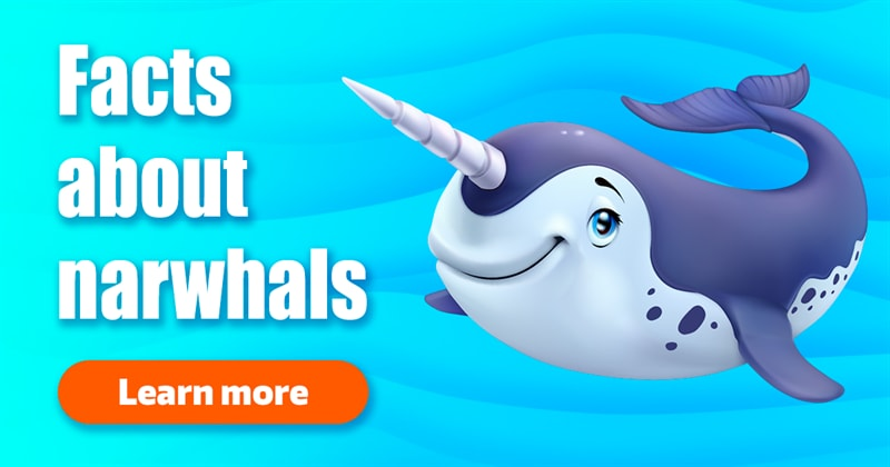 Nature Story: Little-known facts about narwhals, wonderful unicorn whales