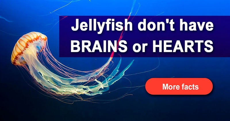 Nature Story: 7 stunning pictures and mind-blowing facts about jellyfish
