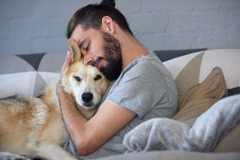 animals Story: dog knows when you are sad facts about dogs