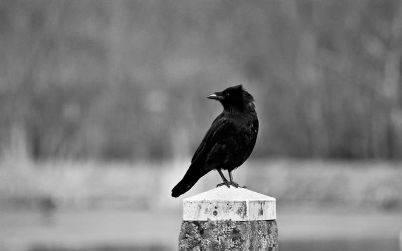 Culture Story: Charles Dickens biography interesting facts ravens Grip