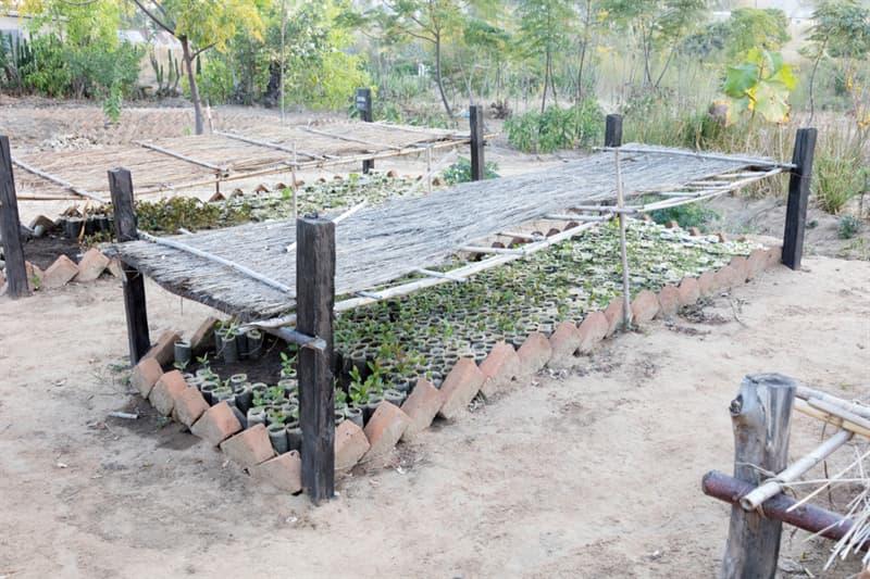 Society Story: Madagascar forest loss - plant trees Madagascar