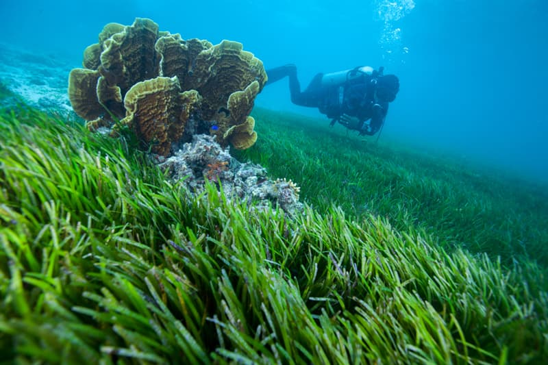 Society Story: population of seagrass - global warming change