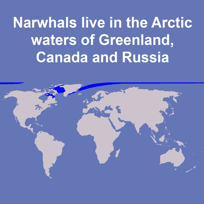 Nature Story: Where do narwhals live?