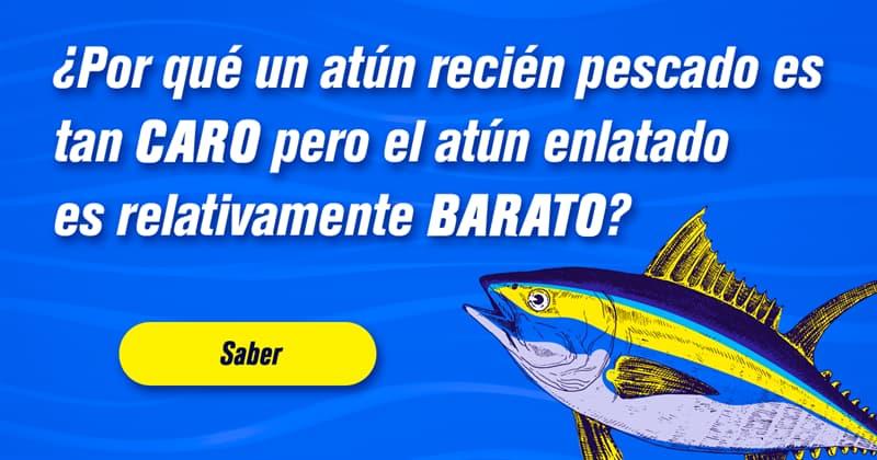 Animales Historia: ¿Por qué un atún recién pescado es tan caro pero el atún enlatado es relativamente barato?