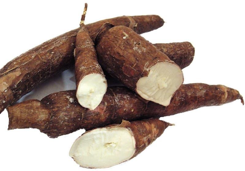 Nature Story: Most dangerous foods Cassava
