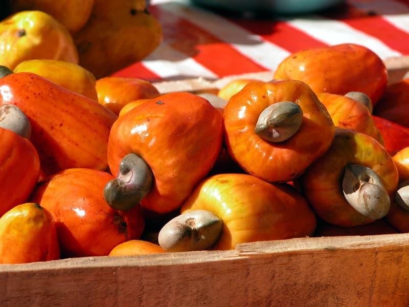 Nature Story: Most dangerous foods Cashews