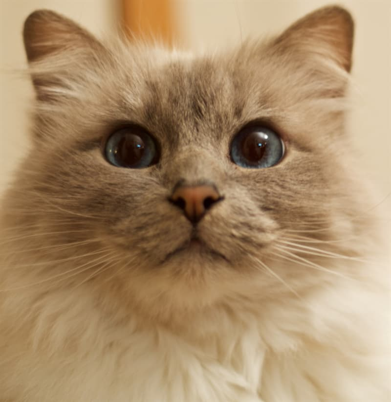 Science Story: Why do cats stare at nothing