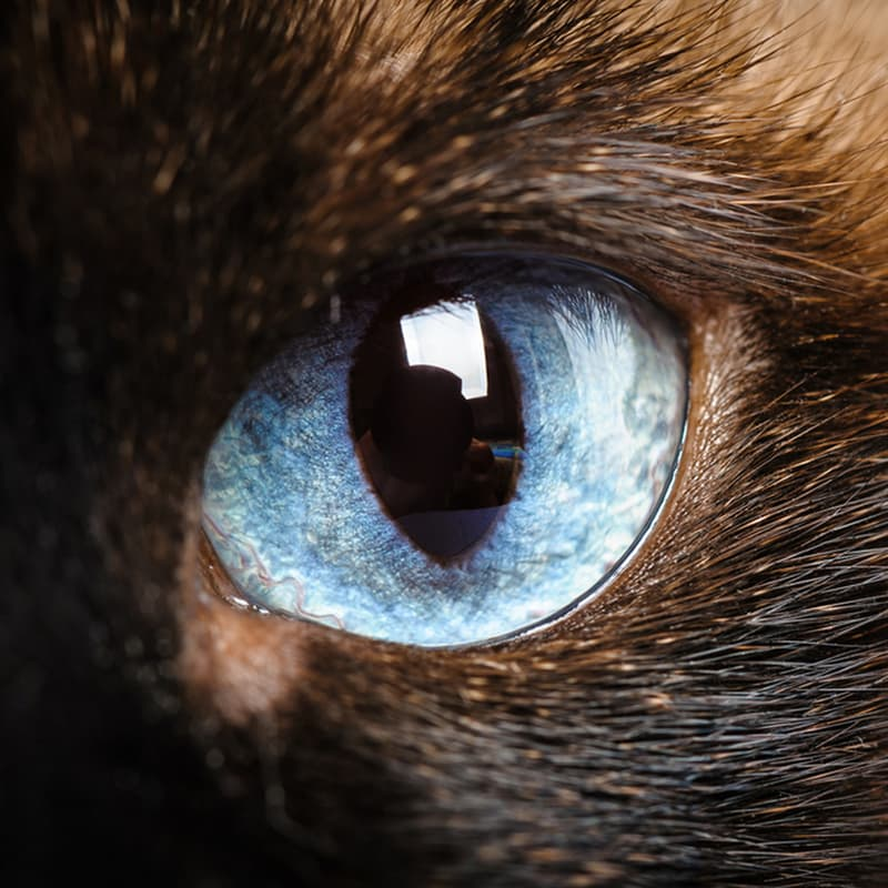 Science Story: Cats ultraviolet vision