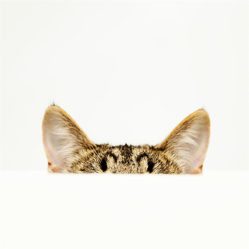 Science Story: Cats sense of hearing