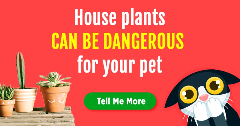 animals Story: 6 hidden dangers that lurk your pet at home