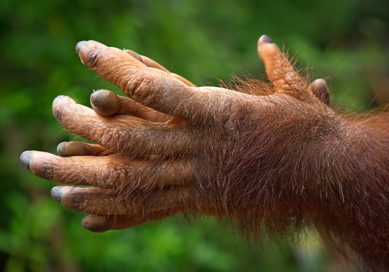 Culture Story: Hitcher with Hairy Hands best scary frightening urban legends scary stories to tell in the dark urban myths