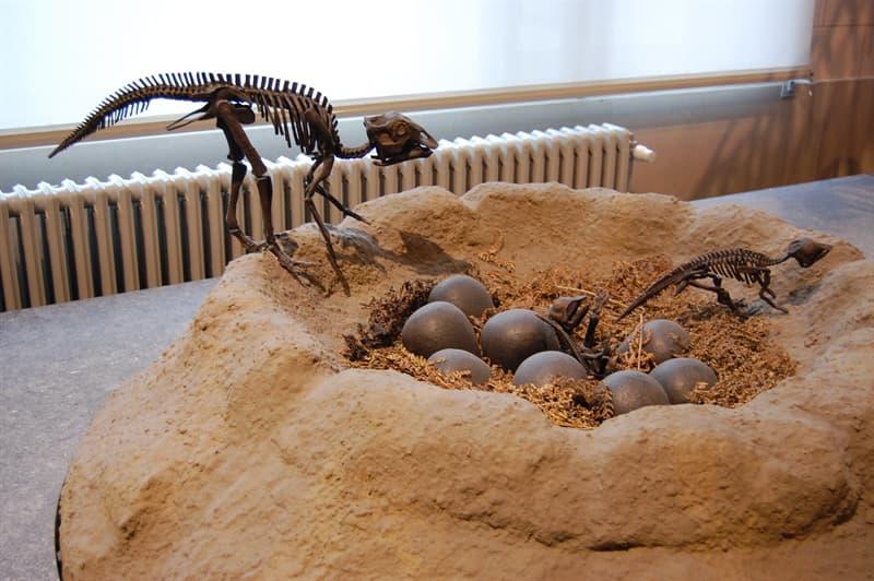 History Story: Micropachycephalosaurus longest name Dinosaur facts unusual dinosaurs jurassic park history