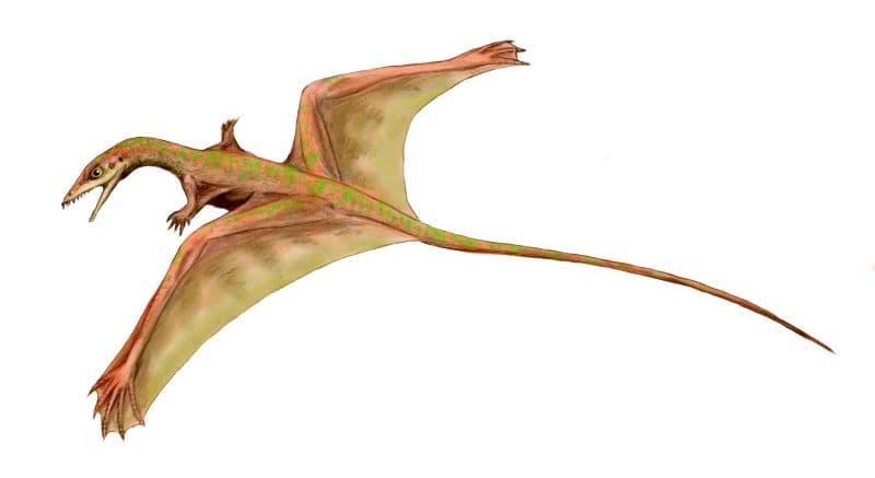 History Story: Sharovipteryx flying Dinosaurs Dinosaur facts unusual dinosaurs jurassic park history