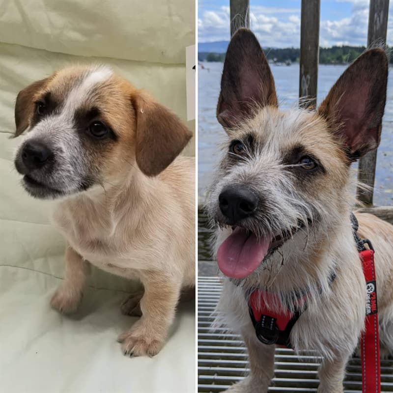 Nature Story: animal rescue animal rescue collective journey home animal rescue animal rescue 2020 pet rescue  rescue transformation pet adoption found pets pets lost and found love cats love dogs loving pets