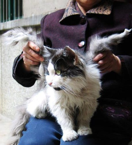 Science Story: mutations animal mutations ugly animals encyclopedia of ugly animals alive monsters Winged cats cats with wings