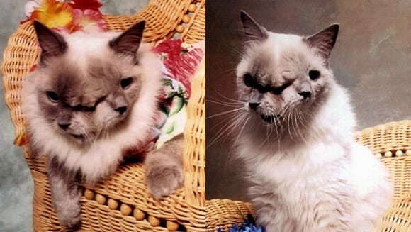 Science Story: Сat with two faces two faced cat Frank and Louie mutations animal mutations ugly animals encyclopedia of ugly animals alive monsters