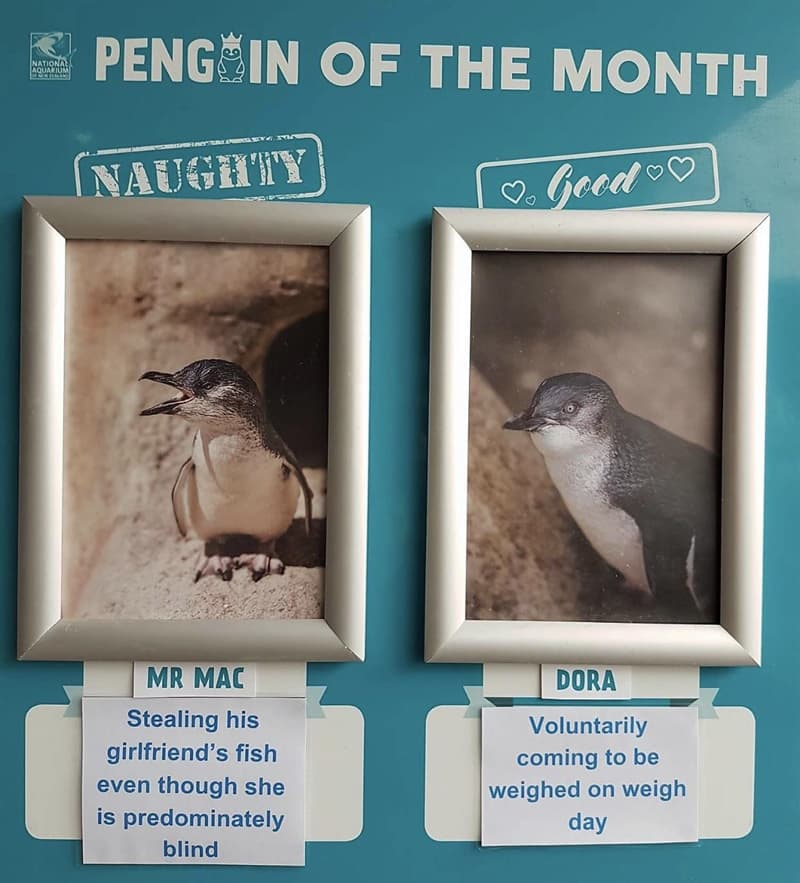 animals Story: National Aquarium of New Zealand funny penguins animals jerks reddit animals being jerks funny photos funny photos of the day cool photos cats knocking things over cats knocking things over